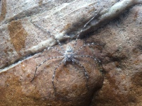 With a very well camouflaged spider
